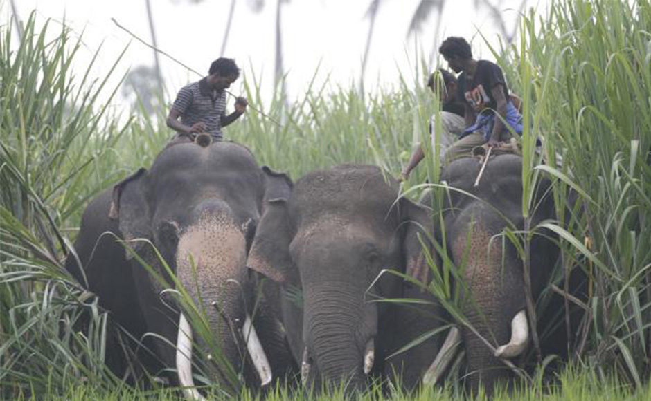 Kerala Elephants and mahouts
