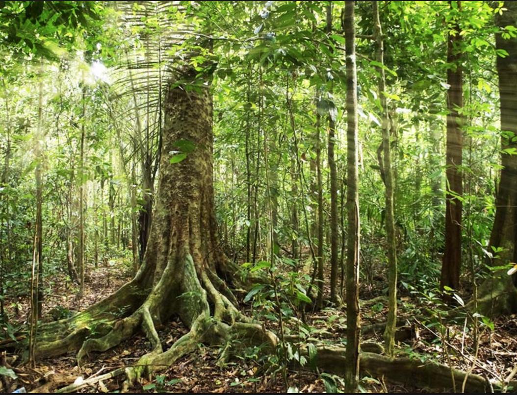 amazaon forest1
