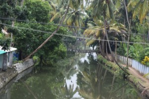 Backwaters of Kochi