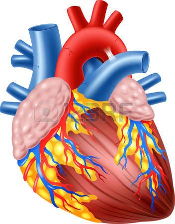 heart-human-nov-16