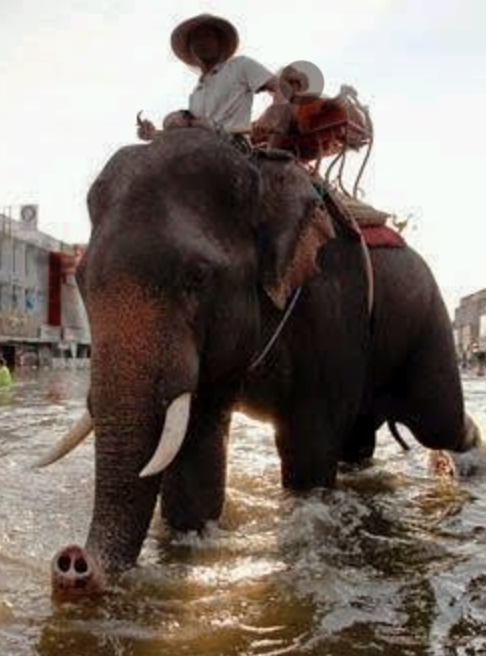 Dozens of elephants to the rescue