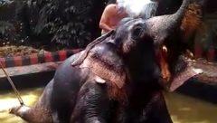 Sharing a bath with elephant
