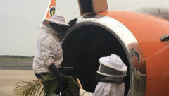 20,000 bees removed from Mango Airlines Engine