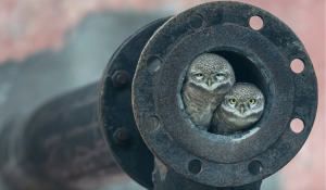 Arsheep Singh's photo of the owls taken just outside Kapurthala, a city in the Indian state of Punjab won the under 10 category