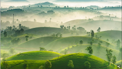 Nguyen Phuc Thanh from Vietnam took this picture of Long Coc the most beautiful tea mountain with hills shaped like upside down bowls, covered in fog catching the sunrise.