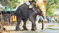 An Elephant runs amok duirng a temple festival