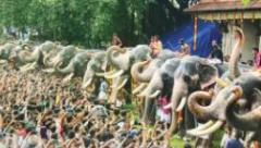 Aanayootu - feeding of 48 elephants