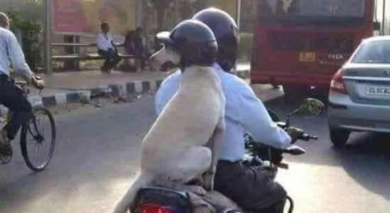 Dog travelling in the back of the motorbike