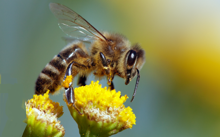Decoding of the buzz of bees