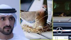 Shiekh Hamdan bin Mohammed bin Rashid Al Maktoum, the Crown Prince of Dubai  refused to use his Mercedes after doves built a nest on it.