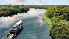 Amazon river in Manaus the origin of Brazilian variation of Covid-19