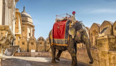 20 elephants removed from tourist rides