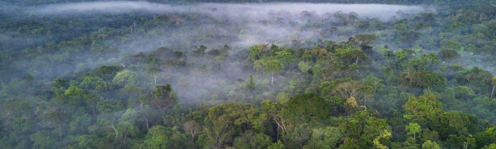 Deforestation of Amazaon rainforest